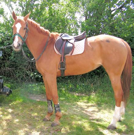 cheval selle