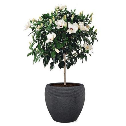 fleur pot