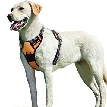 harnais chien