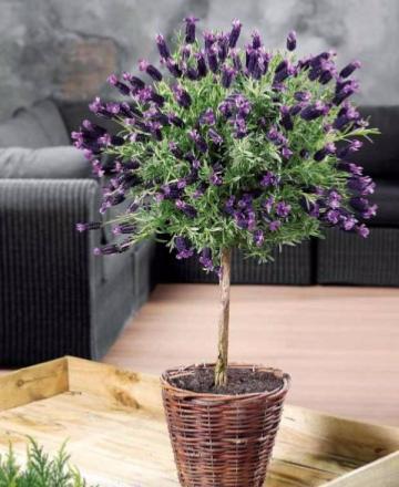 plante d ext rieur en pot trainingsstalmaikewiebelitz. Black Bedroom Furniture Sets. Home Design Ideas