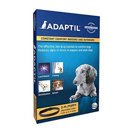 adaptil chien