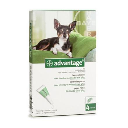 advantage chien