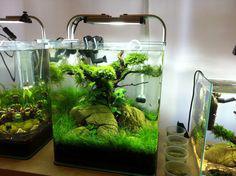 aquarium nano