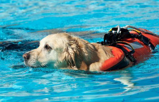 bouée pour chien
