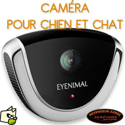 camera pour chat