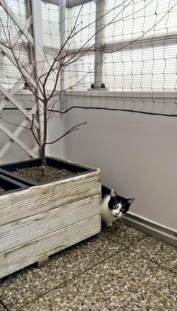 filet de protection pour chat