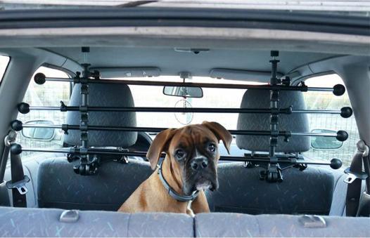 grille voiture chien