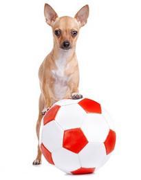 jeux chien