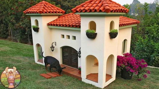 maison pour chien