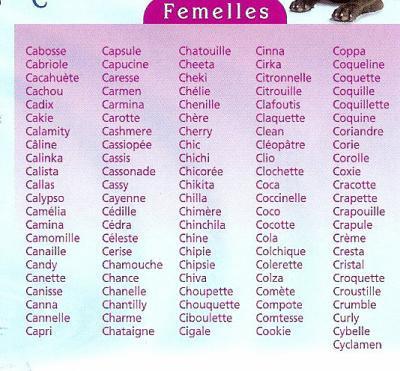 nom de chat femelle original