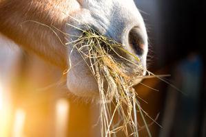 nourriture cheval