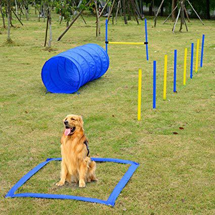obstacle agility
