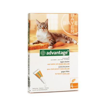 pipette anti puce chat advantage