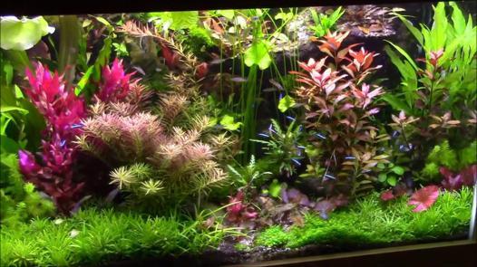 plante aquarium
