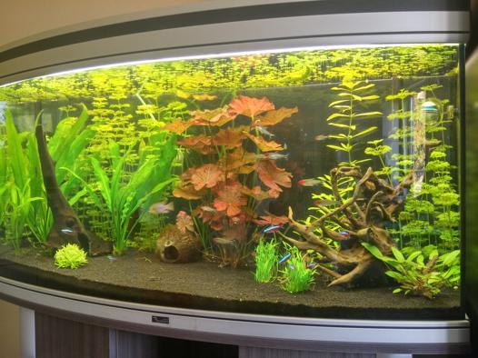 racine d aquarium