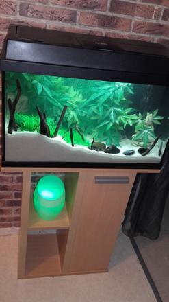 sable blanc aquarium