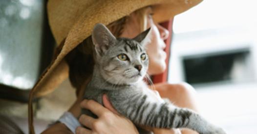 voyager avec son chat